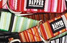 Dapper Dog Collars & Leads