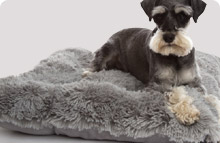 Doza Dog Cushions