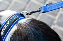 EzyDog Collars & Leads