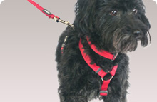Plain Nylon Dog Harness