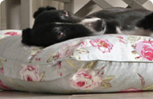 Orthopaedic & Memory Foam Dog Beds