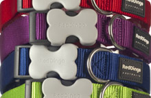 Plain Nylon Dog Collars & Leads