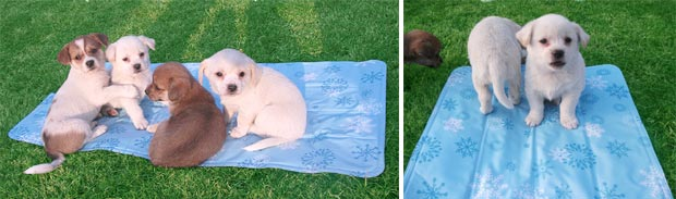 Chillr Dog Cooling Mat Keep Your Dog Cool In Warm Weather