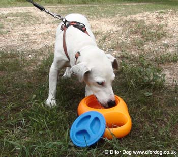 portable dog water bottle bowl