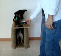 Highchair for dog with megaesophagus bailey chair