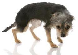 ترسیدن سگ تنبیه بدنی