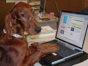 Dog Funny Dog Vs Cat Diary
