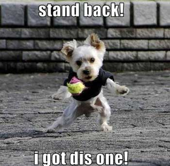 funny dog pic I got thisFunny Pictures Of Dogs With Sayings