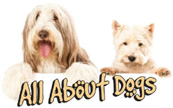 all about dogs logojpg all about dogs 450x150
