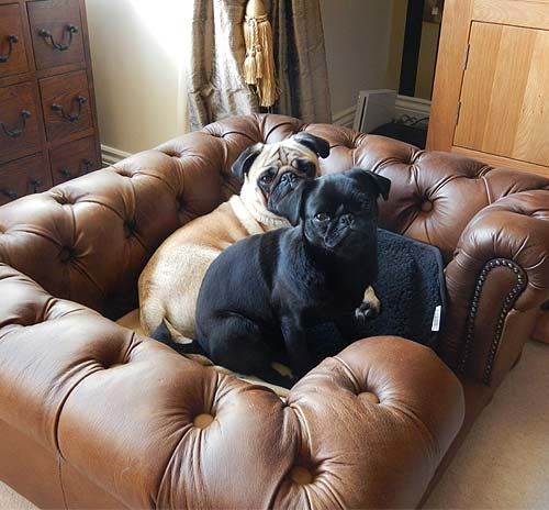 Leather Or Fabric Sofa With Cats: Balmoral Natural Tan Real Italian Leather Dog Bed