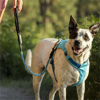 Knot-a Carabiner Dog Lead
