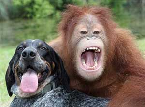 Suryia the orangutan and Roscoe the hound have an unlikely friendship