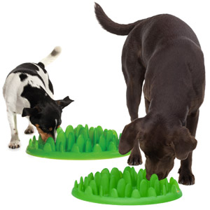 dog feeder to slow down your dog's eating