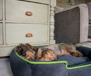 lounger comfortable dog bed