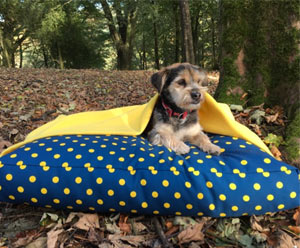 Yellow luxury burrow dog bed