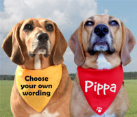 personalised message dog bandanas