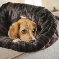 cosy place for fearful dogs to hide