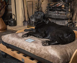 raised orthopaedic dog bed with cover