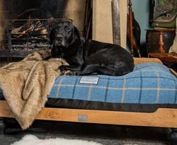 orthopaedic dog bed with cover