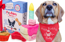Dog Birthday Gifts  sc 1 st  DforDog & Unique Dog Gifts u0026 Personalised Presents for Dogs