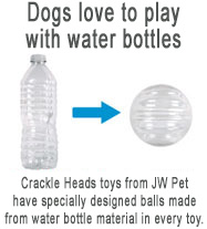 dogs love water bottles