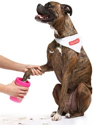 Dexas MudBuster dog paw cleaner