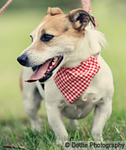 gingham red bandana for dogs