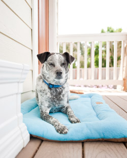 dog crate mat chill pad