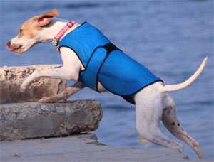 Dog cool coat Thermlow