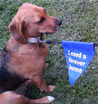 dog lead warning message bunting