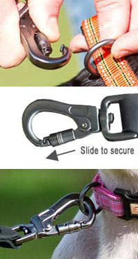 dog lead with secure clip