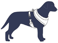 measuring guide for padded dog harness