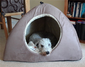 Dreamy Dog Igloo Bed