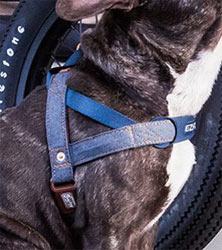 easy fit dog harness