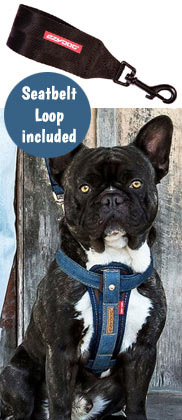 EzyDog Chest Plate dog harness with free car restraint