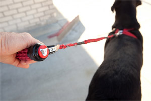 selecting the best dog lead