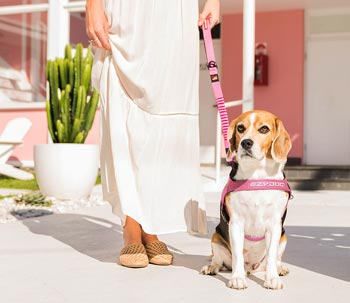 EzyDog pink dog lead and harness