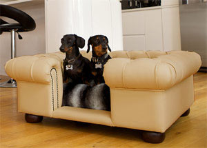 luxury faux leather dog sofa bed in champagne
