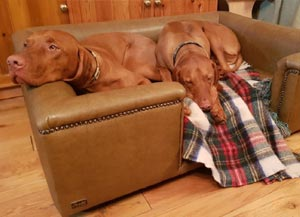faux leather luxury dog bed in camel