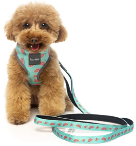 Summer Punch FuzzYard dog harness and lead