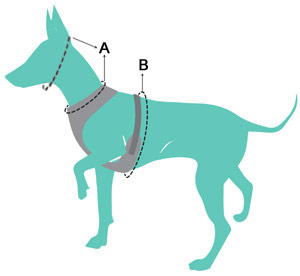 Measuring your dog for a FuzzYard harness