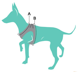 Measuring your dog for a FuzzYard Step-in harness