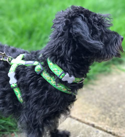 Flanno Lime Green dog collar and harness