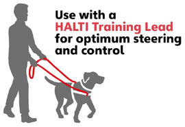 Halti dog training stop pull harness and lead