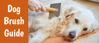 The best dog brush guide