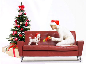 Dog care during Christmas