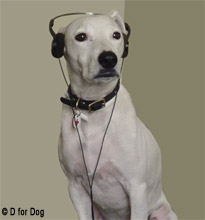 Deaf Dogs Living With And Training A Deaf Dog