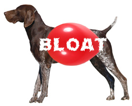 dog bloat