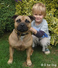 Dog Etiquette and Child-Dog Interaction