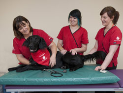 dog donating blood at Pet Blood Bank UK